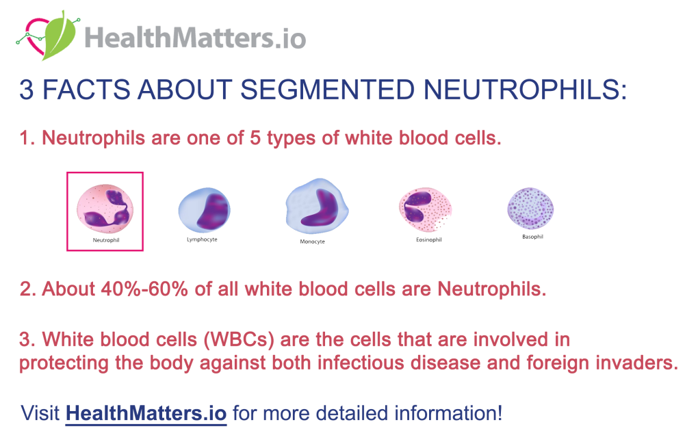 segmented neutrophils white blood cells leucocytes low high reference value