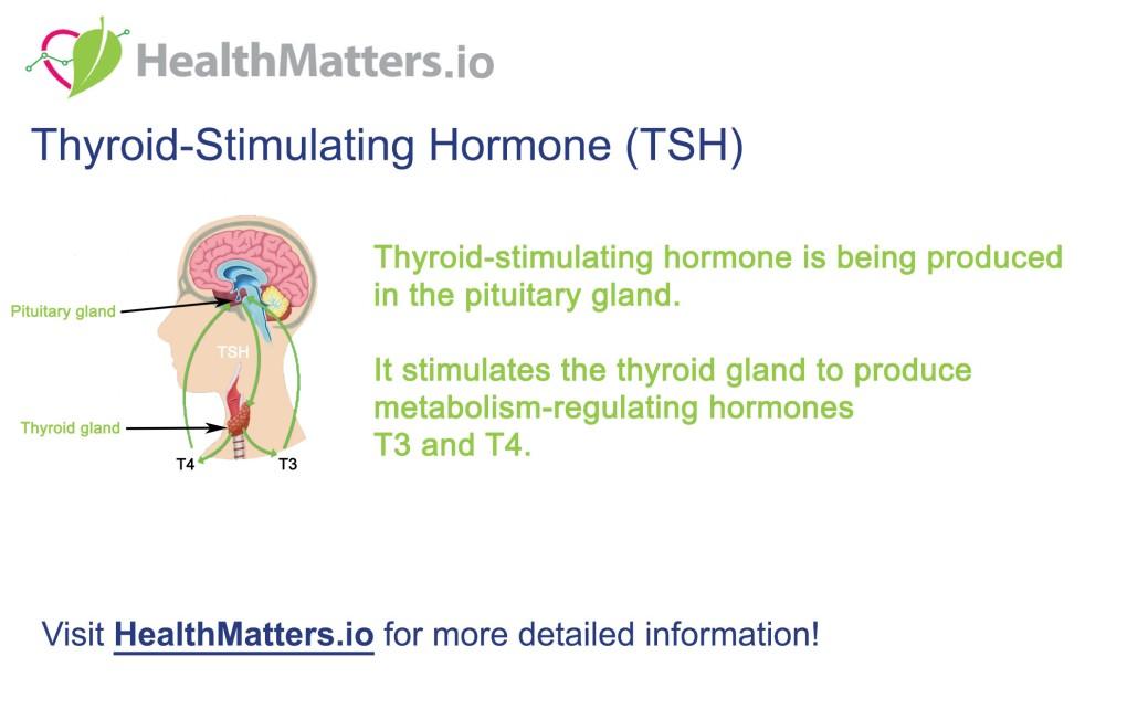 TSH high low normal range Thyroid stimulating hormone t3 t4