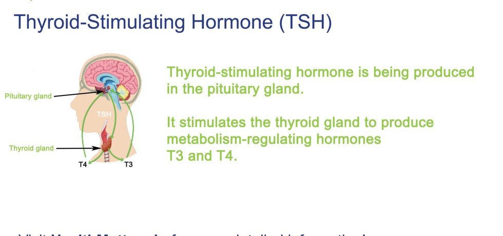 TSH high low normal range Thyroid stimulating hormone t3 t4