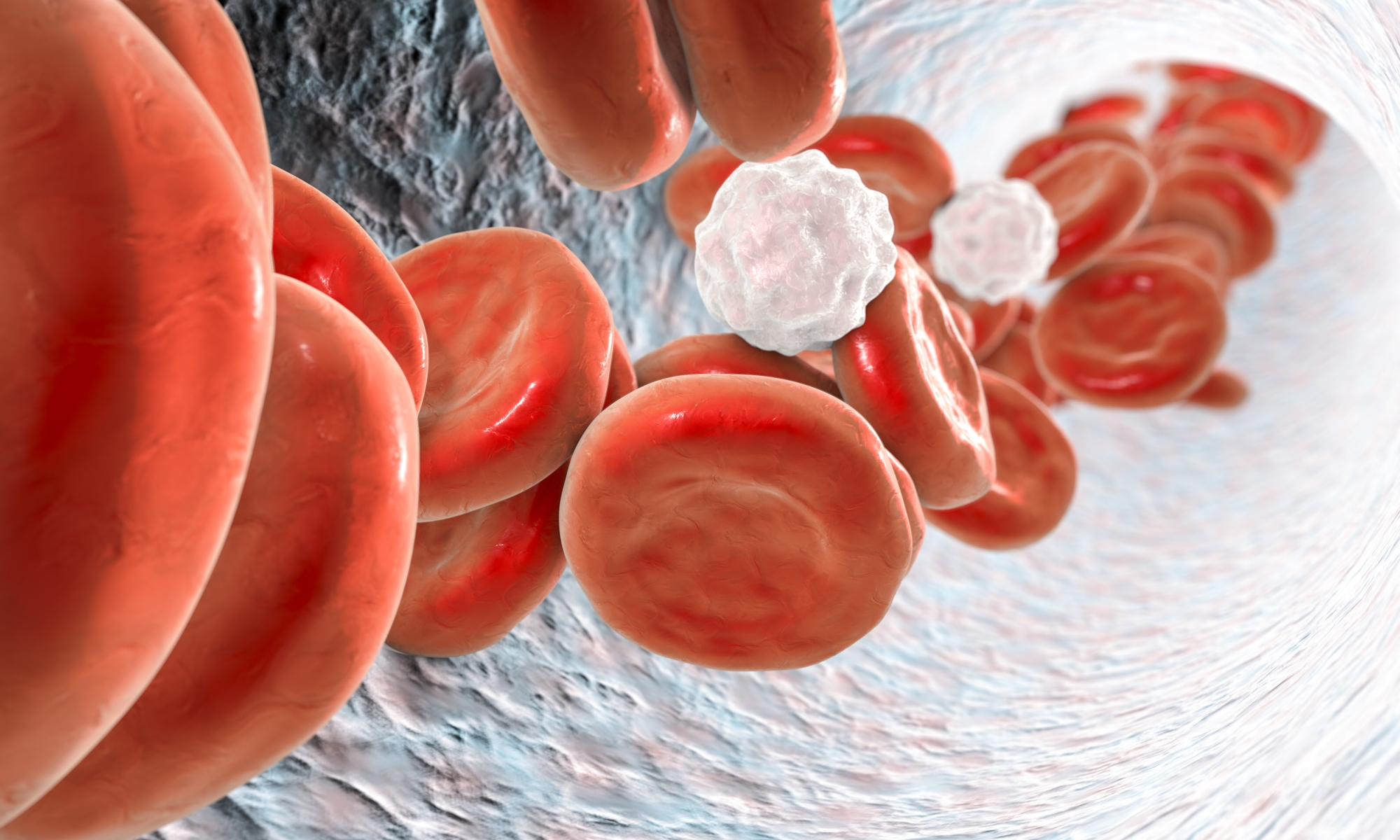 Inside blood vessel with red blood cells and white blood cells. 3D illustration