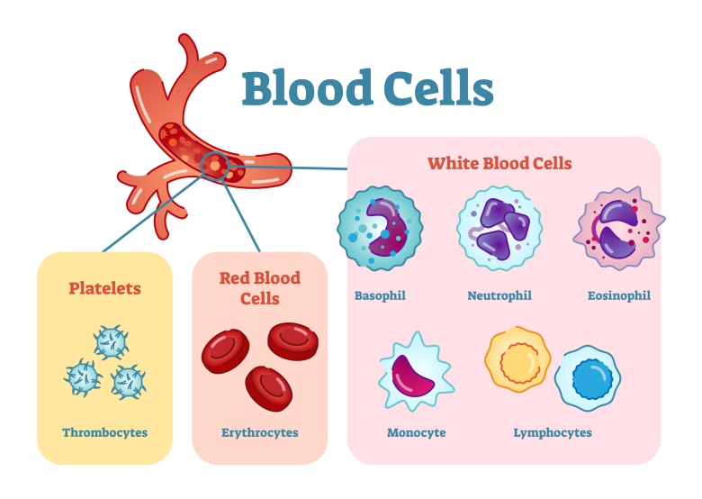 blood cell types