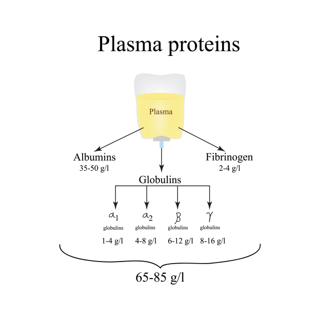 plasma proteins albumin globulin alpha-1 fibrinogen