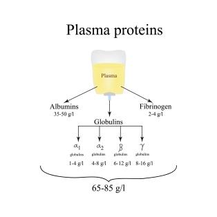 Plasma proteins. Albumin. Fibrinogen. Globulin. Infographics. Ve