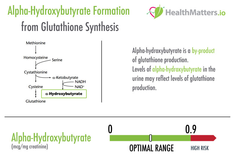 alpha-hydroxybutyrate high low reference ranges value glutathione synthesis