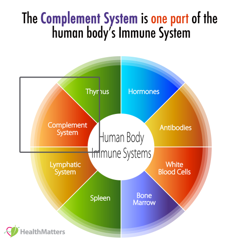 complement system c4 high low meaning