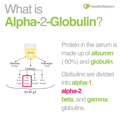 alpha-2 globulin high low meaning interpretation lifestyle recommendations liver blood work results