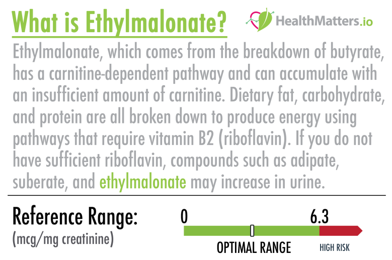 ehtylmalonate high low meaning treatment test results