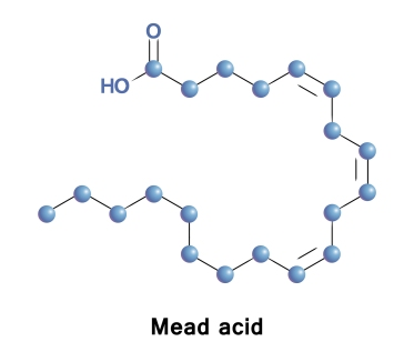 mead acid genova high low meaning deficiency essential fatty acids treatment