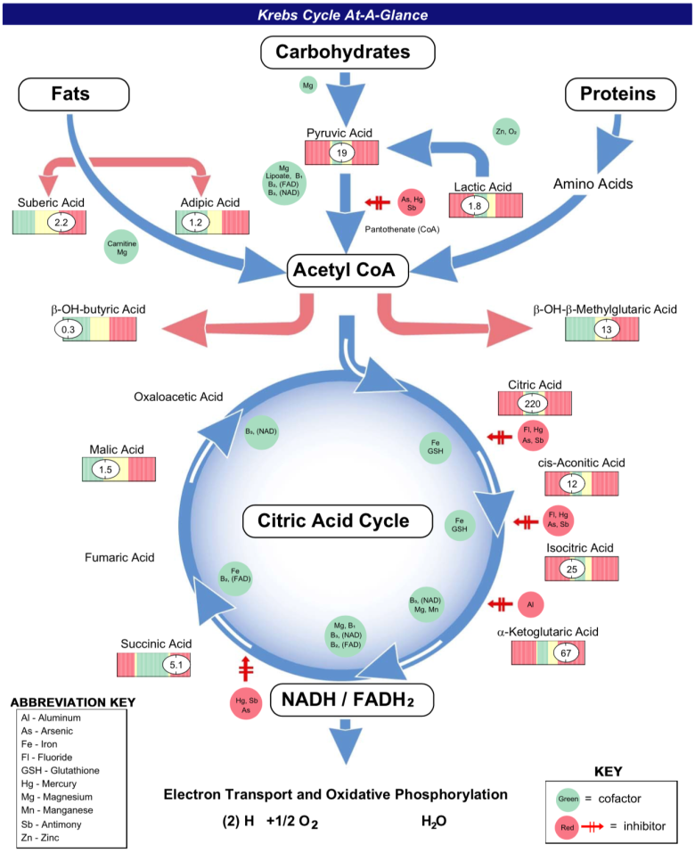 krebs cycle at a glance citric acid cycle high low treatment cis-aconitic acid