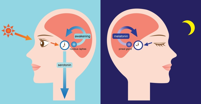 melatonin high low waking dutch meaning treatment pdf interpretation