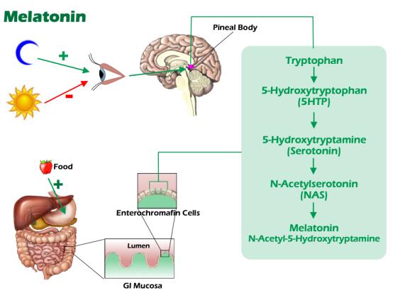 melatonin high low meaning treatment interpretation