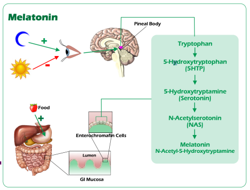 tryptophan high low meaning treatment interpretation lab results