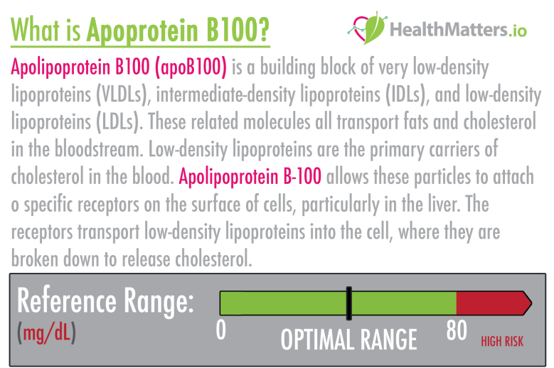 Apoprotein B100 (ApoB 100) high meaning treatment cardiac b100 apob100 lipid profile ldl hdl triglycerides cholesterol low density