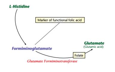 histidine high low meaning treatment interpretation interpretive genova urine test healthmatters