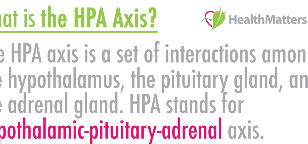 The HPA axis is a set of interactions among the hypothalamus, the pituitary gland, and the adrenal gland. HPA stands for hypothalamic-pituitary-adrenal axis.