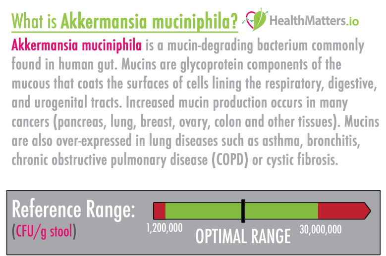 Akkermansia muciniphila high low meaning treatment gut biome