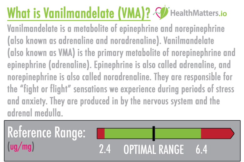 vanilmandelate high low meaning hva vma metabolite epinephrine norepinephrine adrenaline noradrenaline dutch dried urine functional