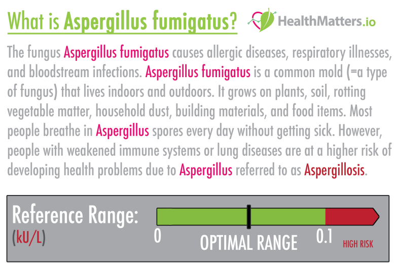 Aspergillus fumigatus high meaning treatment symptoms