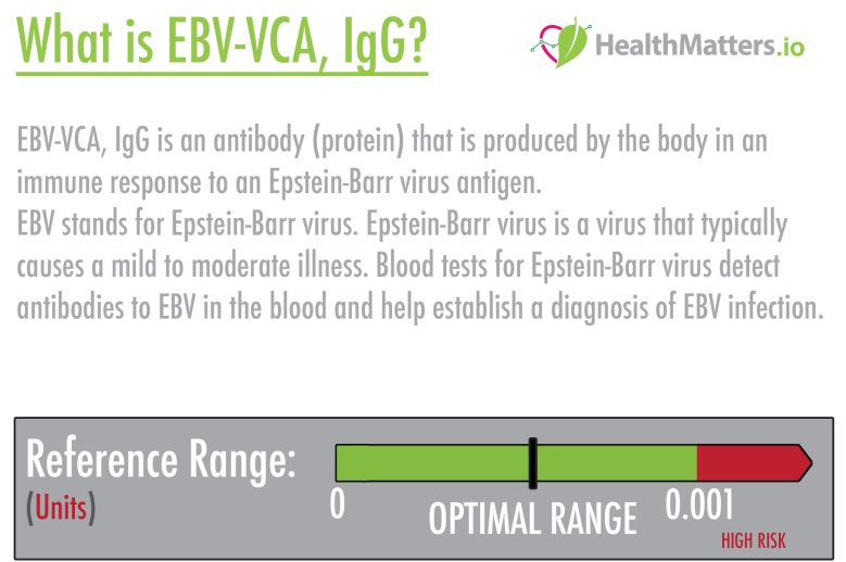 EBV-VCA, IgG EBV-VCA, IgG is an antibody (protein) that is produced by the body in an immune response to an Epstein-Barr virus antigen.  EBV stands for Epstein-Barr virus.   Epstein-Barr virus is a virus that typically causes a mild to moderate illness. Blood tests for Epstein-Barr virus detect antibodies to EBV in the blood and help establish a diagnosis of EBV infection.